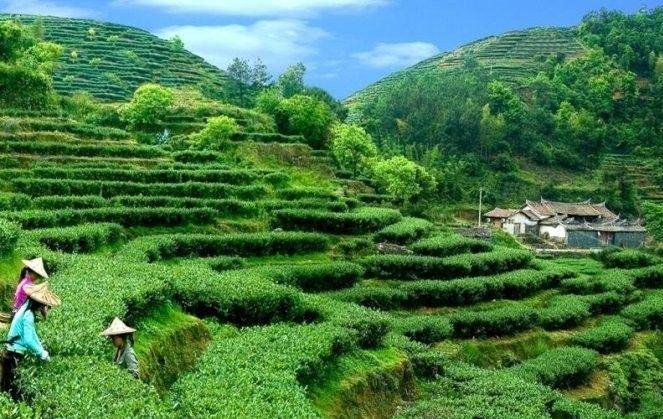 Китай провинция чая